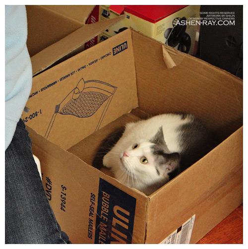 catbox.jpg