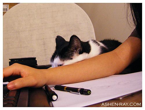 catdesk2.jpg