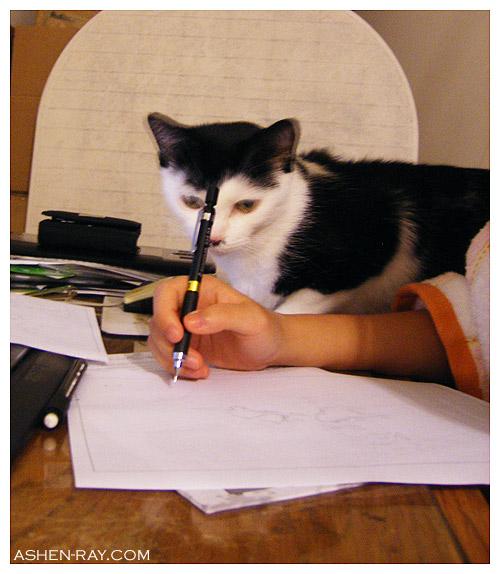 catdesk4.jpg